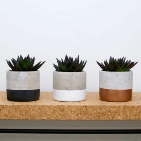 Echeveria Black Knight Succulents - from the online florist for western Sydney