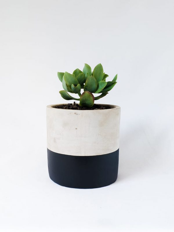 Dipped Succer • Black - Dipped Concrete Succulent Pot
