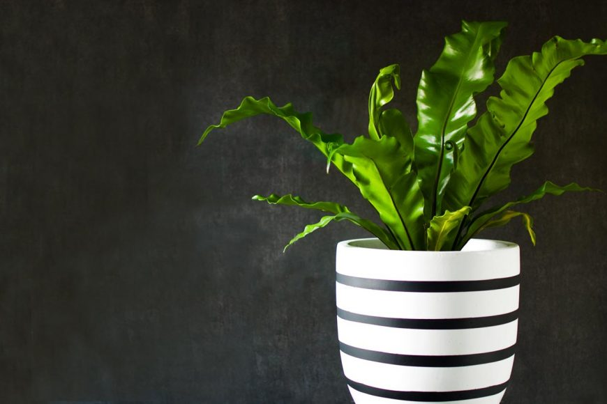 Plants… more good than just their looks