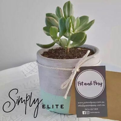 Corporate Gifting Flowers Succulents Plants