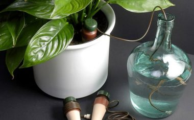 'Not There Plant Care' – Caring for plants while you're away on holiday