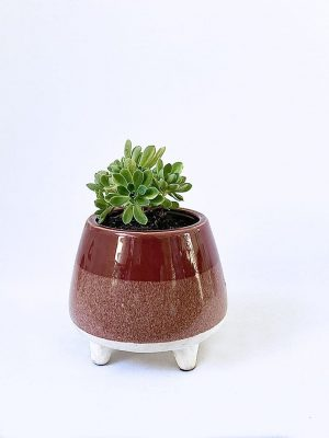 Two Tone Berry Succer