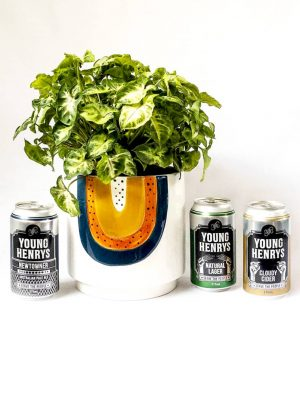 The Taster Gift Pack - Plant and Young Henry Beer