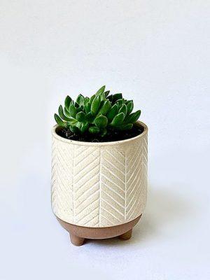 Kyra Succer Succulent Planter