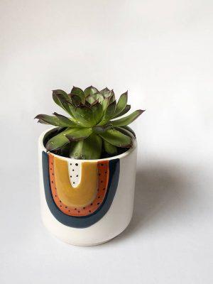 Bigger Succer Succulent Gift