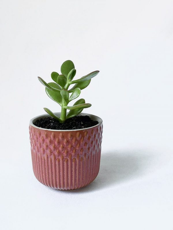 Tuscan Berry Succer