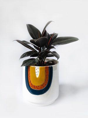 Ficus Elastica Rubber Plant Burgundy